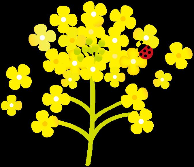 菜の花とてんとう虫イラスト